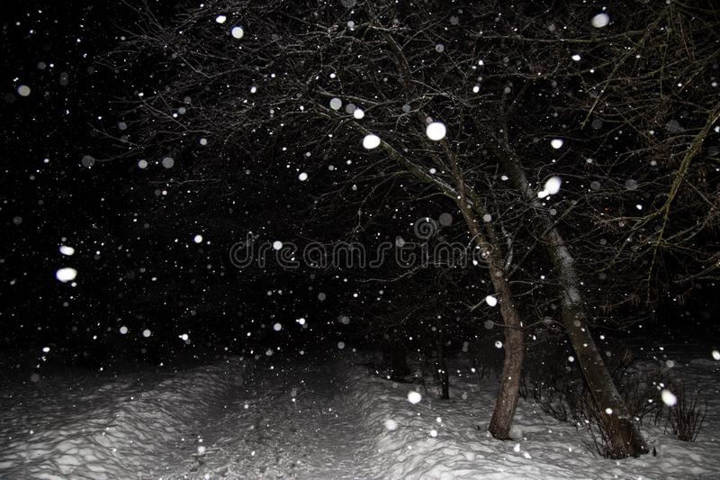 Snowfall, blizzard, snow flakes. Winter night landscape with trees and road stock photography