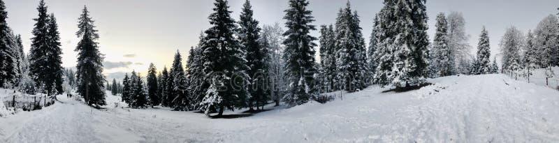 snowfall Drzewa w śniegu Niebo w zima sezonie piękny widok zdjęcie royalty free