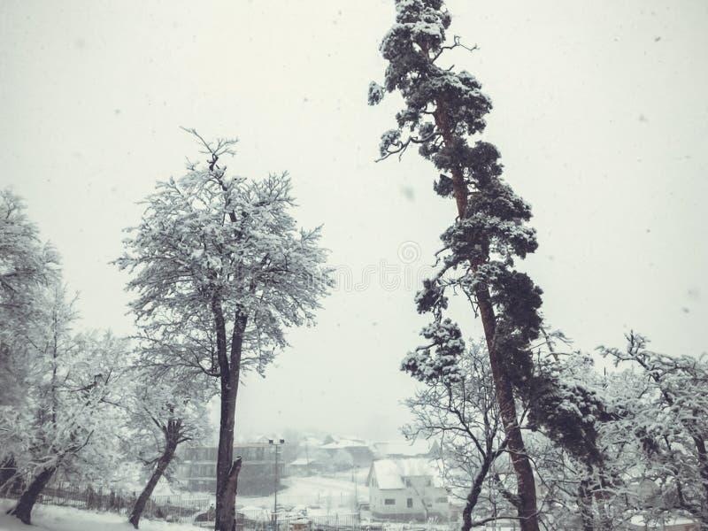 snowfall Drzewa w ?niegu Niebo w zima sezonie pi?kny widok obraz royalty free