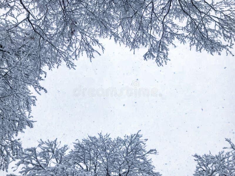 snowfall Drzewa w ?niegu Niebo w zima sezonie pi?kny widok zdjęcia stock