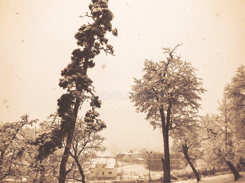 snowfall Drzewa w ?niegu Niebo w zima sezonie pi?kny widok zdjęcie royalty free