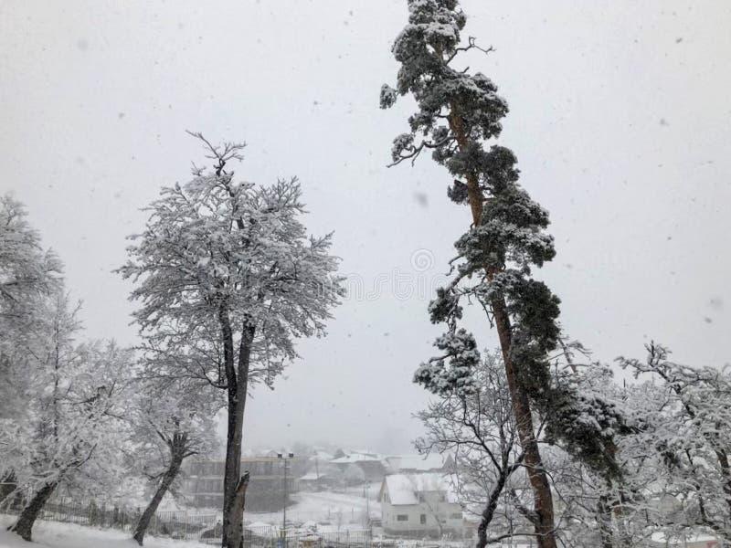 snowfall Drzewa w ?niegu Niebo w zima sezonie pi?kny widok obraz stock