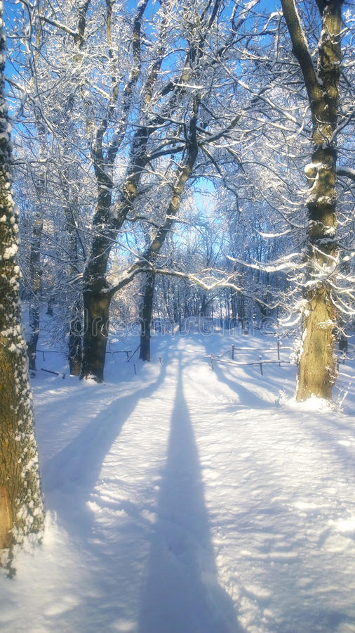 Snowfall. Winter landscape in the park. royalty free stock image