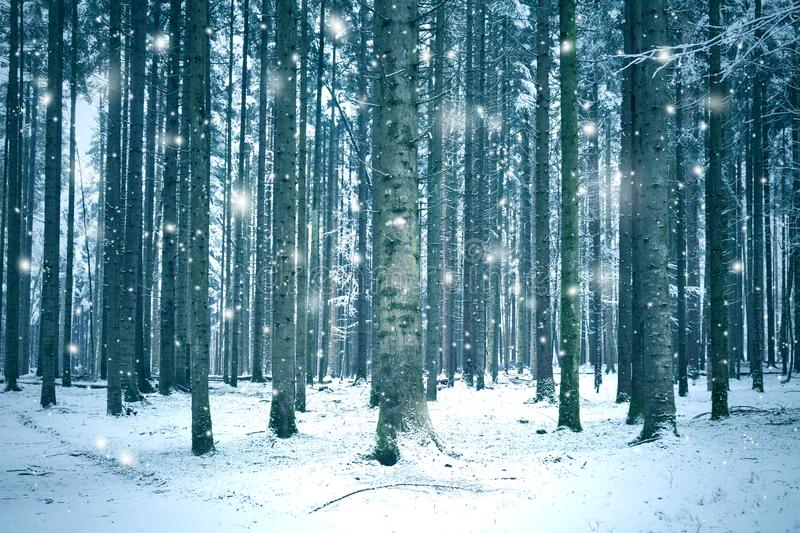 Snowfall in forest landscape. Winter season forest landscape with abstract snowflakes stock photos