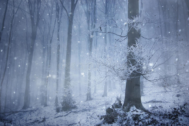 Snowfall in a magical forest with a huge old tree royalty free stock photo