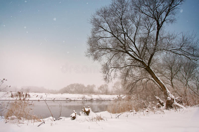 Snowfall over the river. Winter misty cloudy snowy weather. Cane and grass under snow and frost on a riverbank royalty free stock image