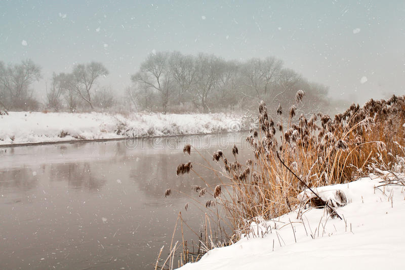 Snowfall over the river. Winter misty cloudy snowy weather. Cane and grass under snow and frost on a riverbank royalty free stock photo