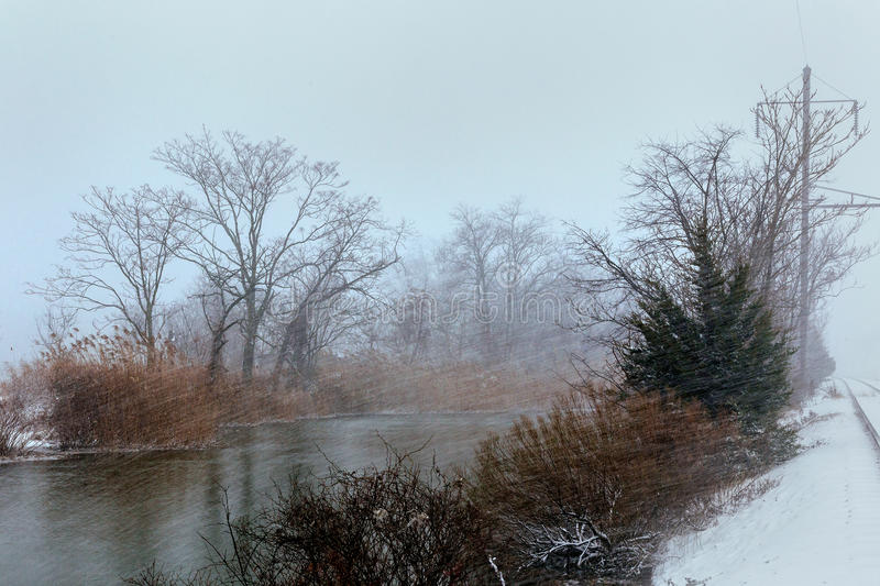 Snowfall over the river. Winter misty cloudy snowy weather. Cane and grass under snow and frost on a riverbank stock photography