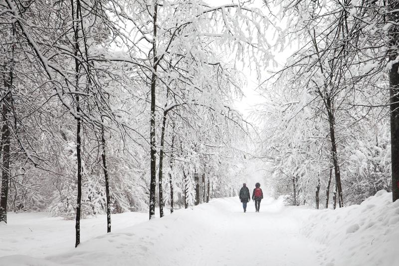 Snowfall in the park, snowy winter road, snow covered trees landscape. cold season weather concept royalty free stock photography