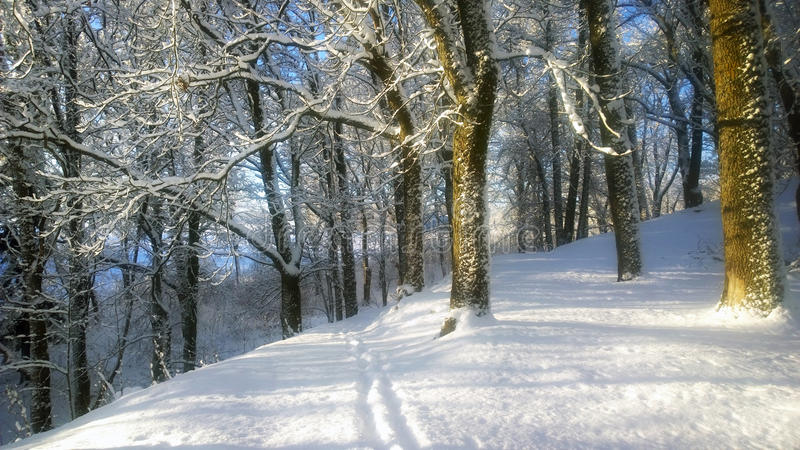 Snowfall. Winter landscape in the park. stock photos