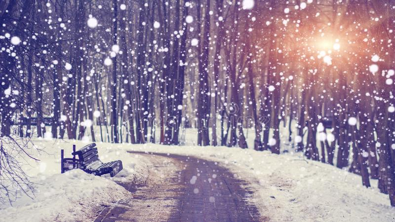 Snowfall in silent winter park at bright sunset. Snowflakes falling on snowy alley. Christmas and New Year theme. Xmas background. royalty free stock photo