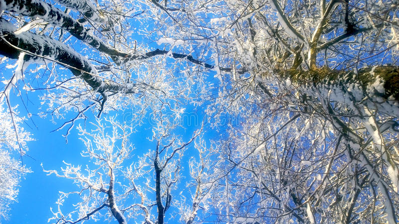 Snowfall. Snow-covered branches against the blue sky. Winter sunny day. Snowfall in January. Christmas weather stock image