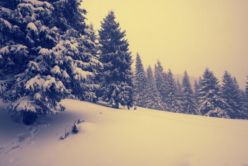 Snowfall in the winter mountains royalty free stock photo