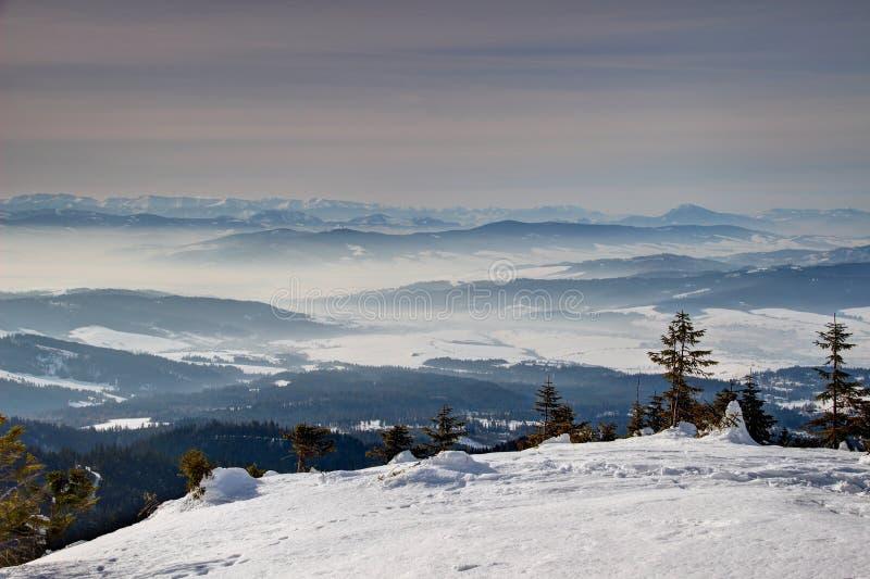 Snowfield ensolarado com pinheiros e os cumes azuis Orava Eslováquia foto de stock royalty free