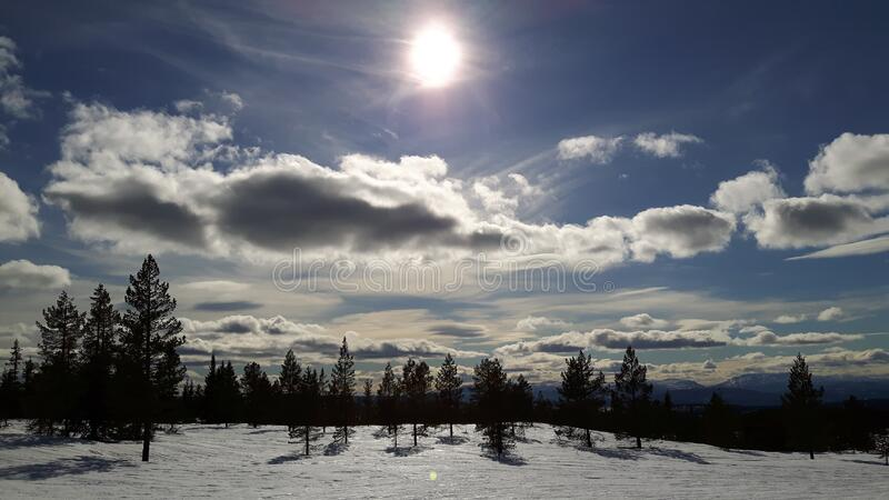 Snowfield With Trees Over Clear Blue Skies During Day Time Free Public Domain Cc0 Image