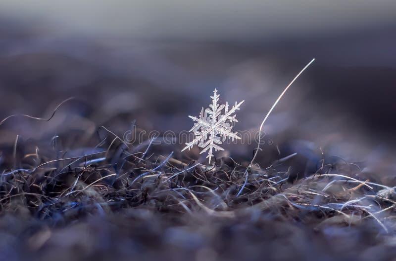Snowflake φυσική ακραία μακροεντολή στοκ φωτογραφίες με δικαίωμα ελεύθερης χρήσης