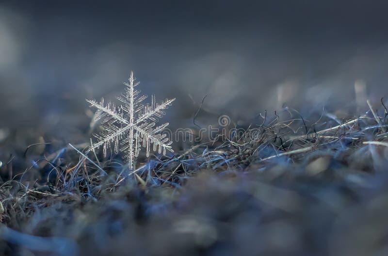 Snowflake φυσική ακραία μακροεντολή στοκ εικόνες