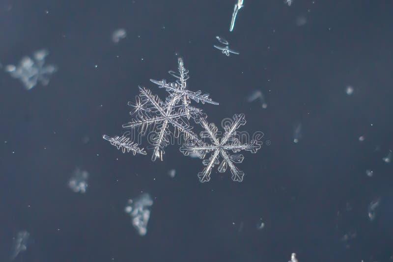 Snowflake φυσική ακραία μακροεντολή στοκ φωτογραφία