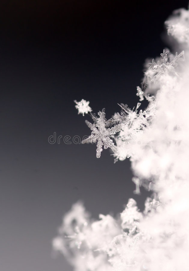 Snowflake. Single snowflake, that is trying to escape from others royalty free stock photo
