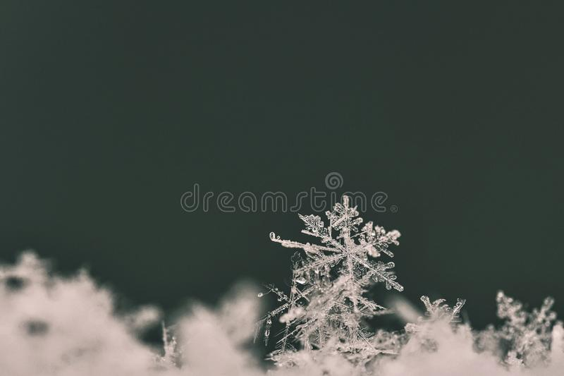 Snowflake. Macro photo of real snow crystal. Beautiful winter background seasonal nature and the weather in winter. stock images
