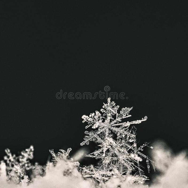 Snowflake. Macro photo of real snow crystal. Beautiful winter background seasonal nature and the weather in winter. royalty free stock photography