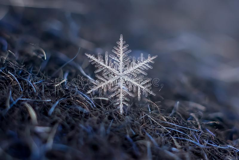 Snowflake Natural Extreme Macro royalty free stock photos