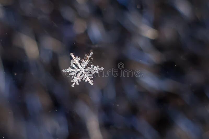 Snowflake Natural Extreme Macro royalty free stock photo