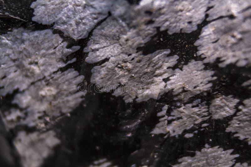Snowflake obsidian υπόβαθρο σύστασης στοκ εικόνα με δικαίωμα ελεύθερης χρήσης