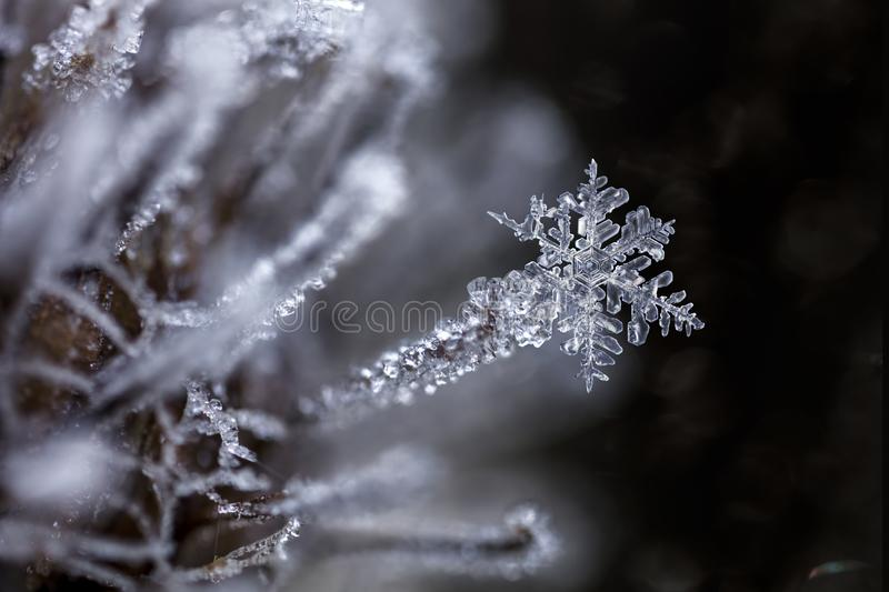 Magical Snowflake frozen stuck to frozen burdock royalty free stock images