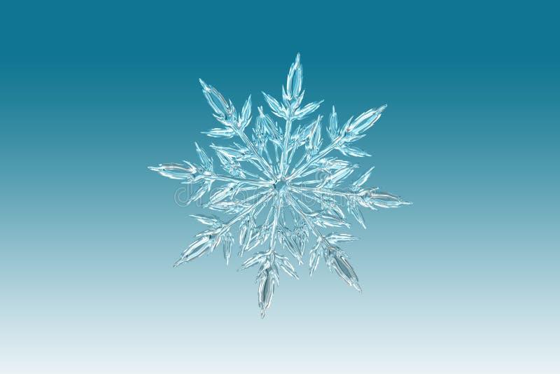 Snowflake, Symmetry, Line, Organism stock image