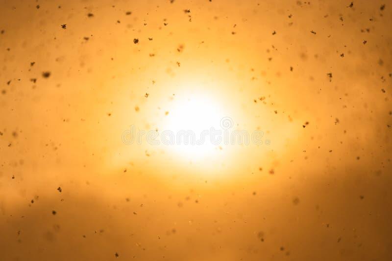 Snowflakes όπως σπινθηρίσματα που πετούν στον αέρα στο πορτοκαλί υπόβαθρο  στοκ φωτογραφία με δικαίωμα ελεύθερης χρήσης