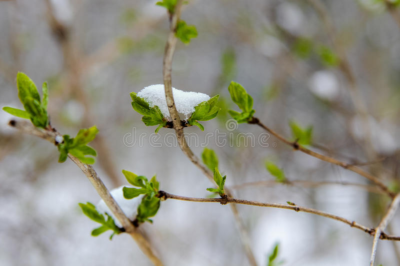 Spring and winter stock photos