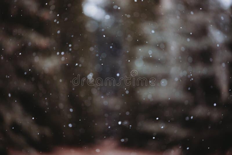 Snowflakes som faller på Michigan Winter royaltyfri bild