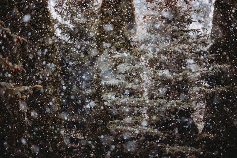 Snowflakes som faller på Michigan Winter royaltyfri fotografi