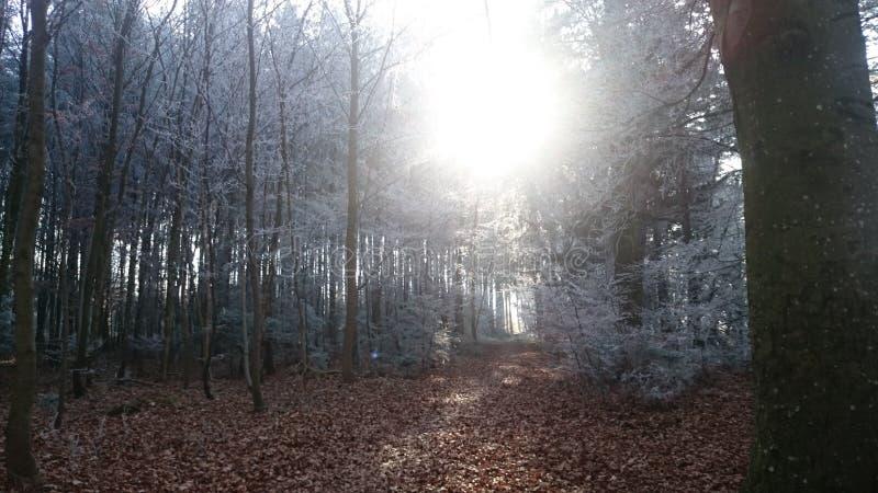 Snowforest immagine stock libera da diritti