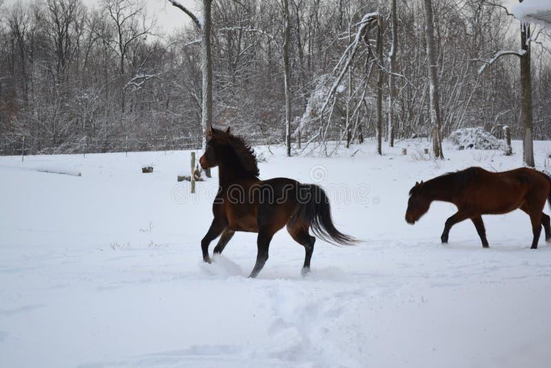 snowing royalty-vrije stock fotografie