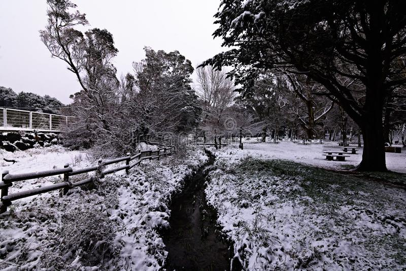 snowing arkivbilder