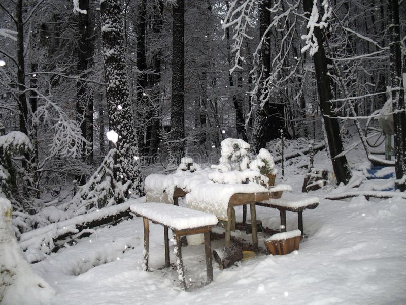 Download Snowing stock photo. Image of forest, vacation, snow - 19229472