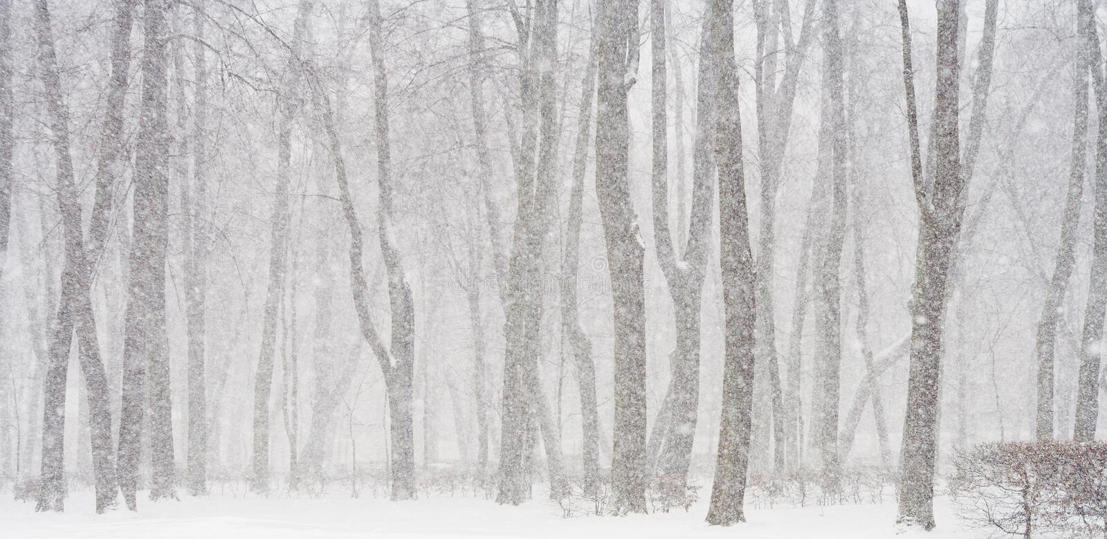 Download Snowing stock photo. Image of frosty, scenics, scenery - 3422694