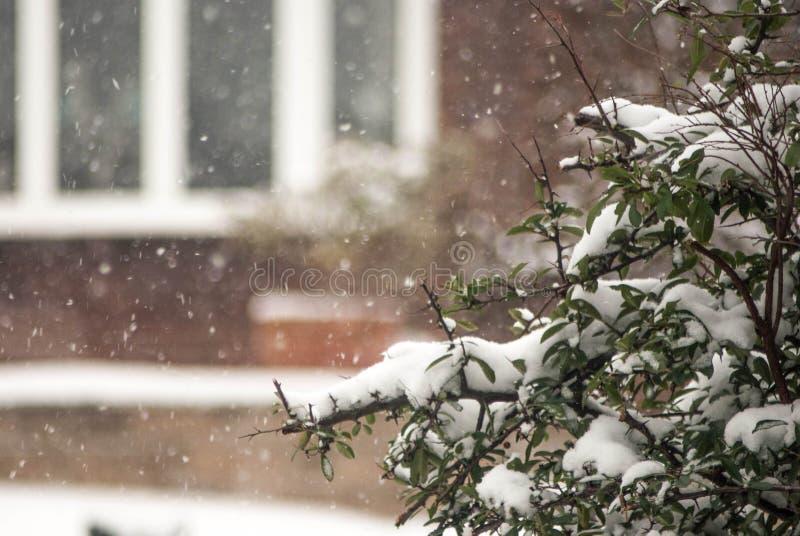 snowing foto de archivo libre de regalías