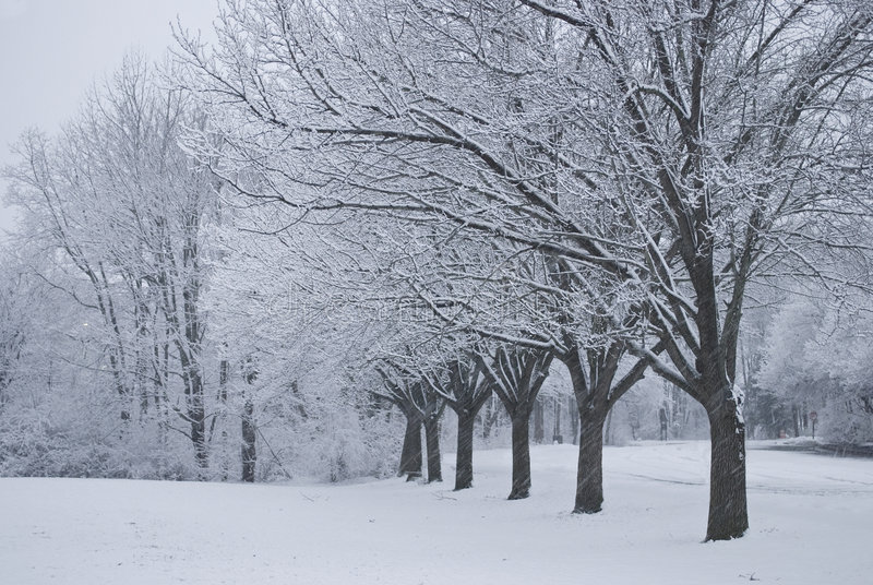 Download Snowing Royalty Free Stock Photography - Image: 8081487