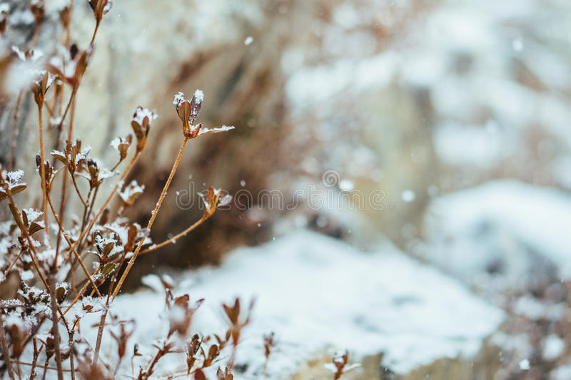 Snowing day royalty free stock images