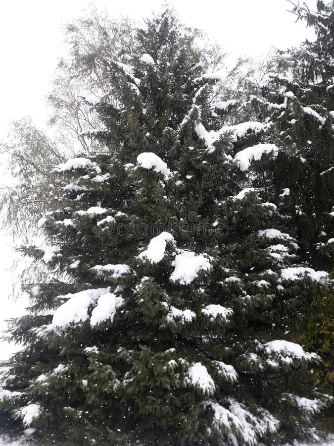 SNOWING FROZEN TREE WINTER SKY royalty free stock image