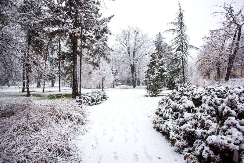 Snowing in park City of Novi Sad. Novi Sad Serbia snow in Dunavski park stock image
