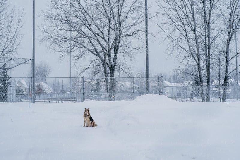 Snowing w parkowej psiej scenie zdjęcie stock