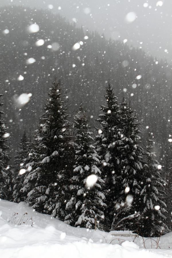 Snowing in winter. Over the trees stock photo