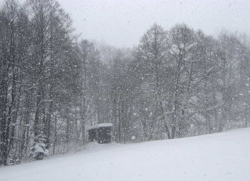 Download Snowing stock photo. Image of outdoor, white, january - 46779074