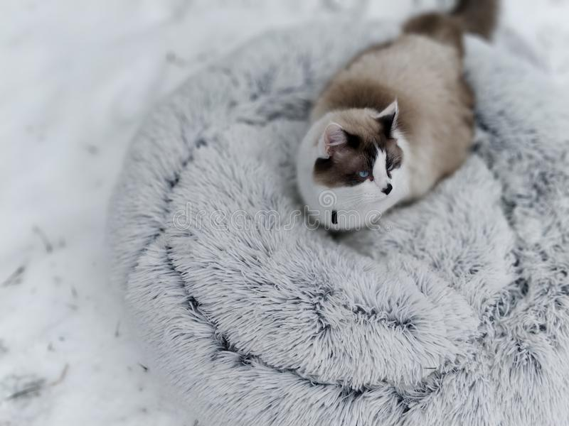 #snowkitty royaltyfri fotografi