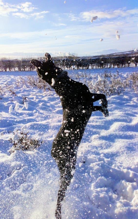 Snowlab fotos de stock