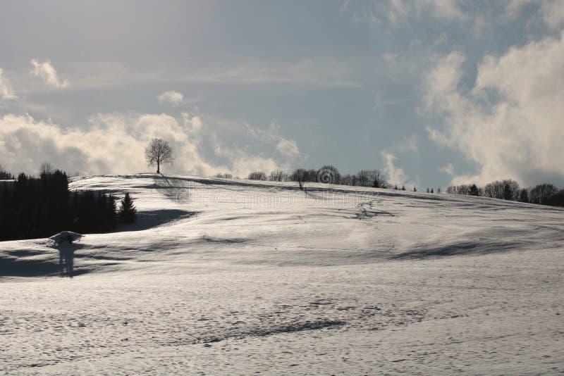 Snowland en de boom in Slowakije royalty-vrije stock foto's